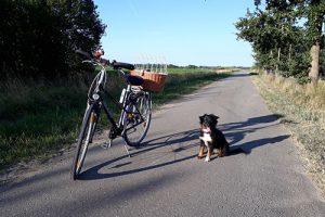 Sicheres Radfahren mit dem Hund